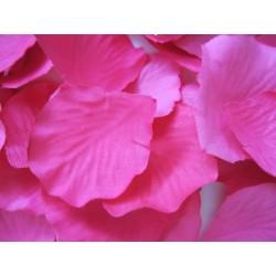 100 Pétales de roses Fuchsia